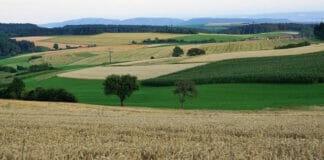 Landwirtschaftsflaeche