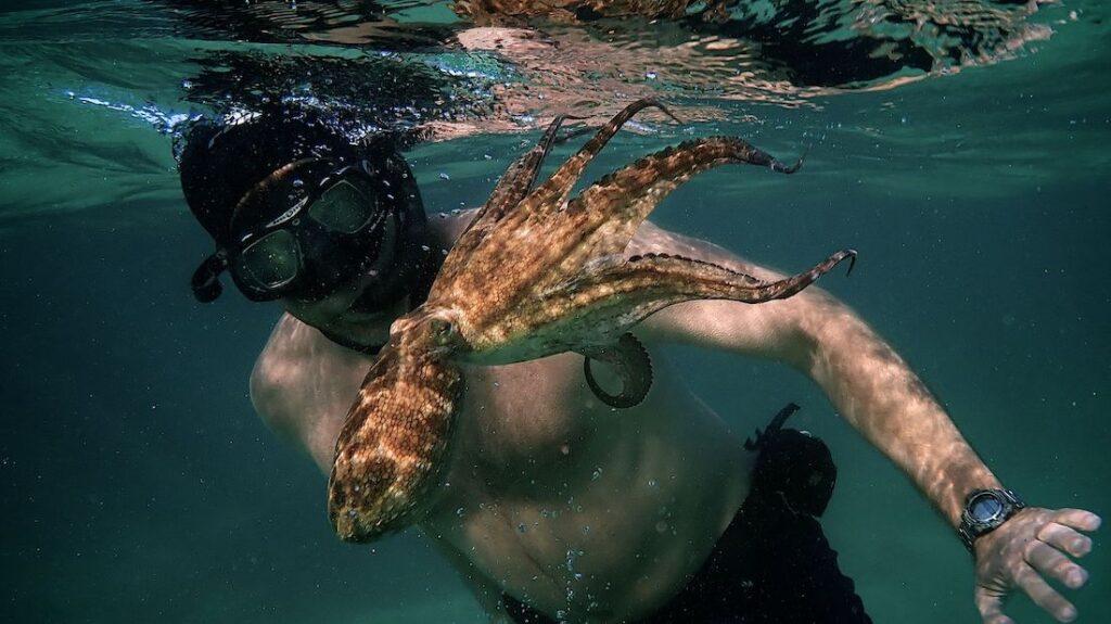 Taucher mit Oktopus