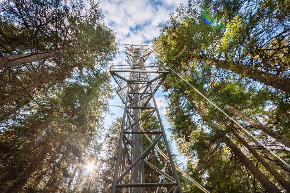 Ueberwachungsturm im Wald