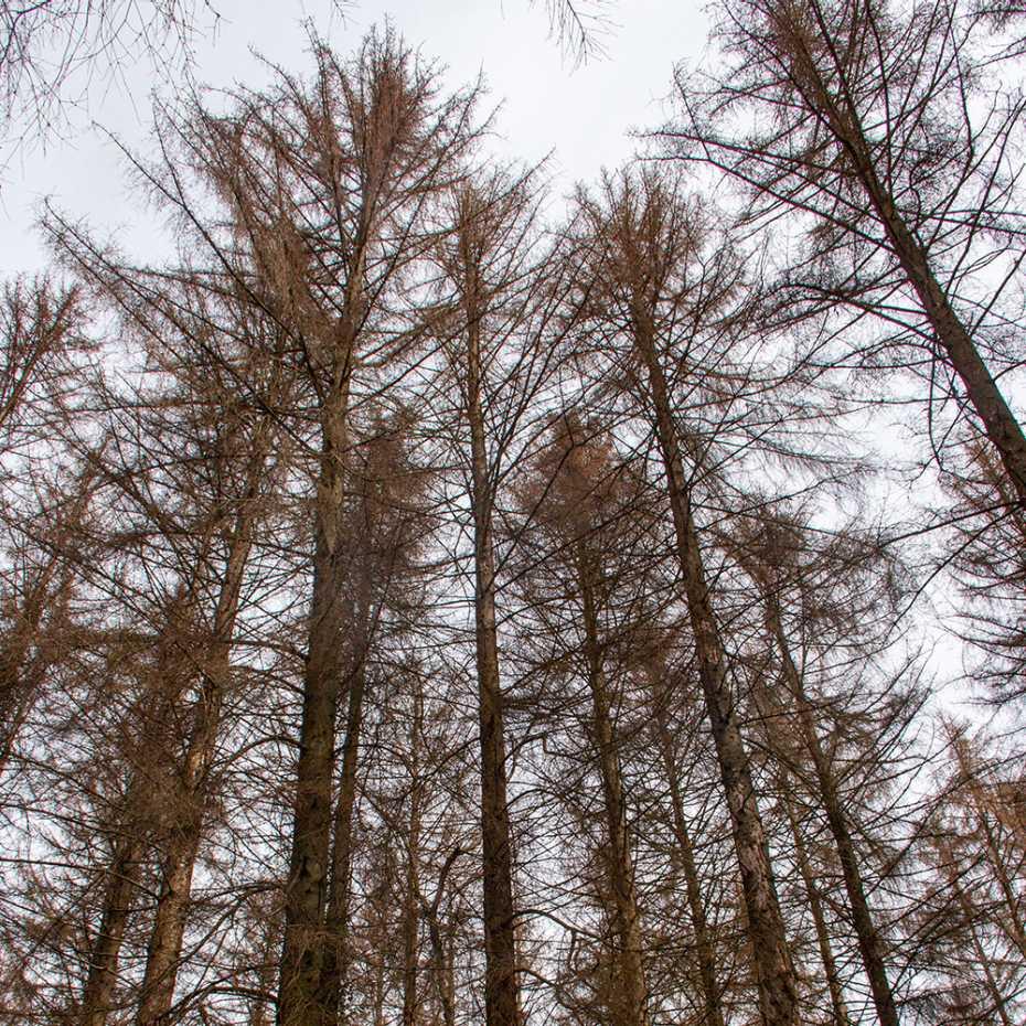 Bäume mit Hinweisen auf Dürre- und Hitzeperioden