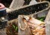 Motorsäge schneidet in einen Baumstamm