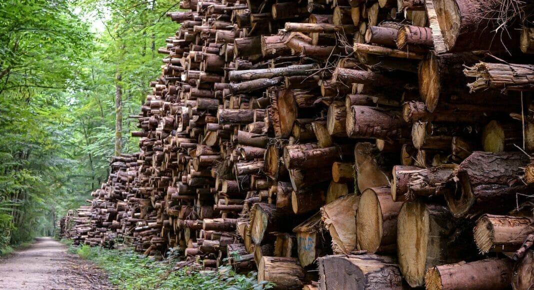 Holzlager neben Waldweg