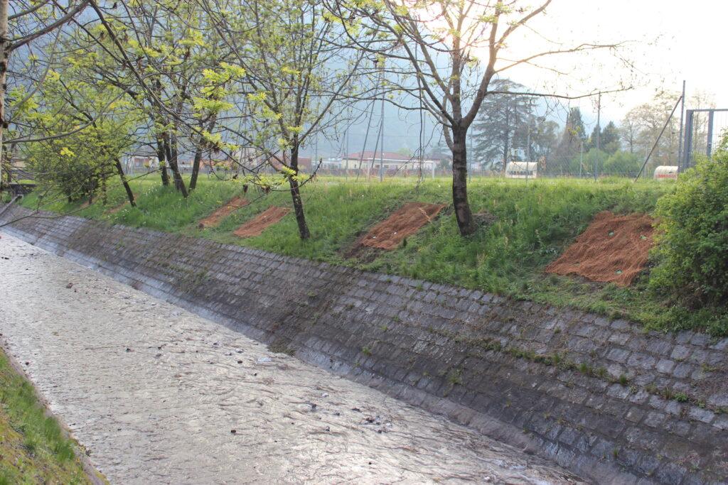 frisch gepflanzte Flächen entlang von Flussufer