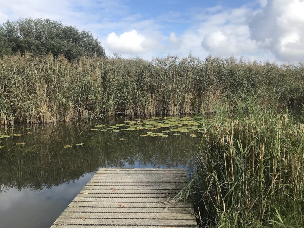 Steg zu Teich