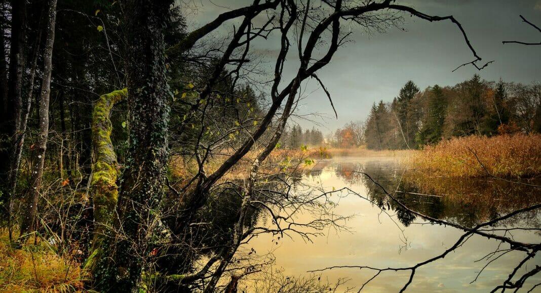 Naturbelassener Teich
