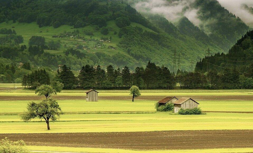 Ein landwirtschaftliches Feld