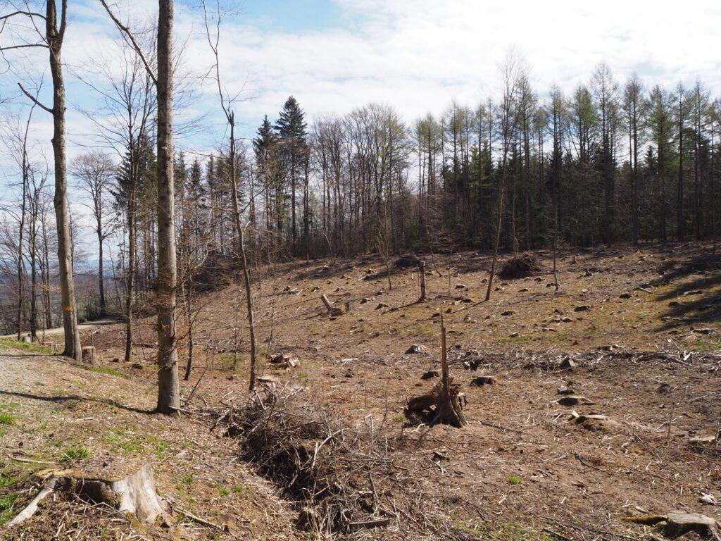 Kahle Wald-Fläche