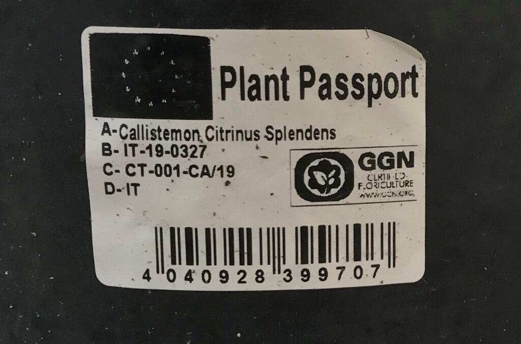 Pflanzenpass auf dem Topf der Callistemon-Pflanze