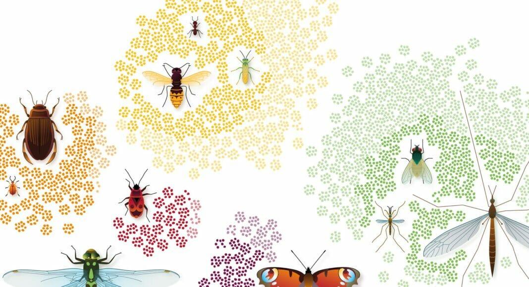 Insektenvielfalt der Schweiz