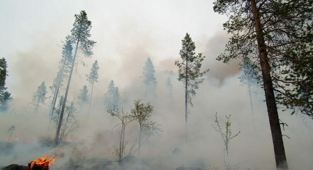 Kontrollierter Waldbrand