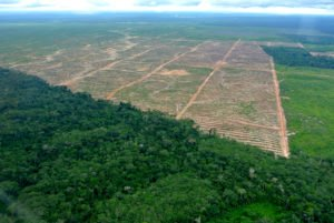 Werden Rodungen weiterhin in diesem Masse betrieben, verschwindet der Regenwald bald komplett. | © Rettet den Regenwald e.V. (Rainforest Rescue) [CC-BY-SA-2.0], via flickr.com