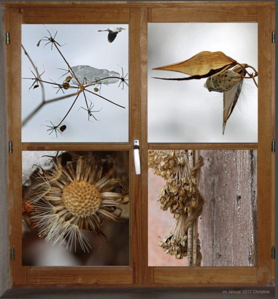 Fenster in den Garten zeigt verschiedene verblühte Blumen.