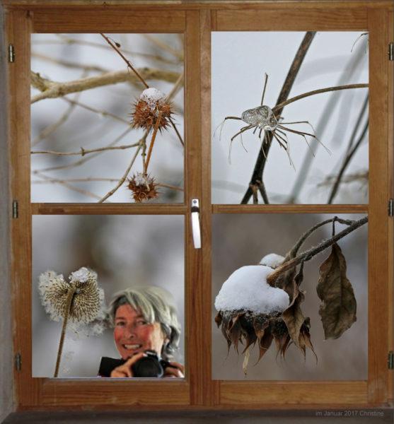 Fenster in den Garten zeigt Vegetatin im Winter.