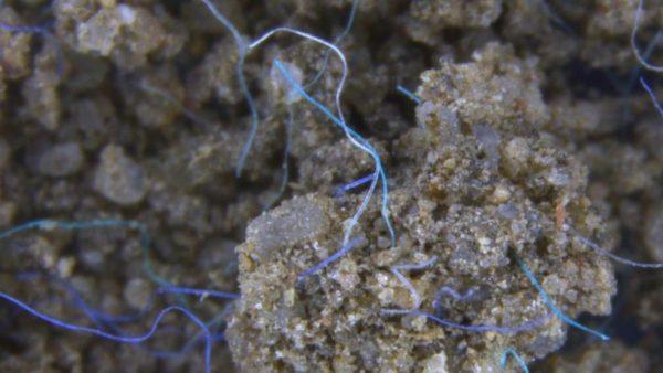 Mikroplastik belastet auch Böden stark. Im Bild sind Polyacrylfasern im Erdreich zu sehen. © Anderson Abel de Souza Machabo, Leibniz-Institut für Gewässerökologie und Binnenfischerei