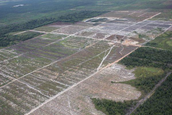 Für Palmölplantage gerodete Regenwaldfläche in Borneo, Inodnesion. | © glennhurowitz [CC-BY-SA-2.0], via flickr.com