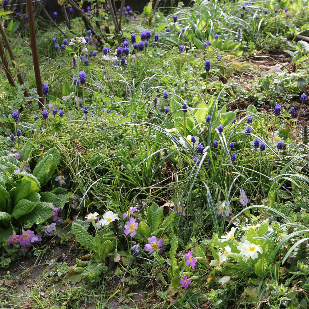 Naturnaher Garten mit vielen Blumen.