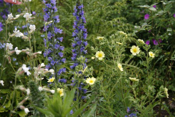 Wildblumenrabatte. © Beatrix Mühlethaler
