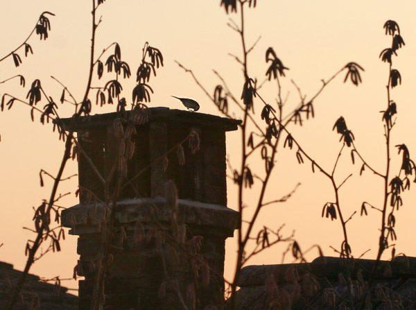Im Dämmerlicht sieht man die Umrisse einer Meise auf dem Kamin.