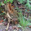 Totholz, wie dieser Stamm, ist ein wichtiger Lebensraum für Insekten und andere Tiere.