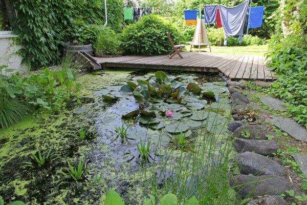 Ein Garten mit naturnahem Teich.