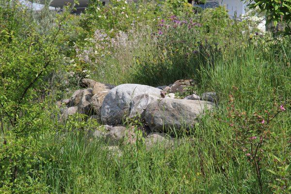 Ein naturnaher Garten mit vielen Wildblumen.