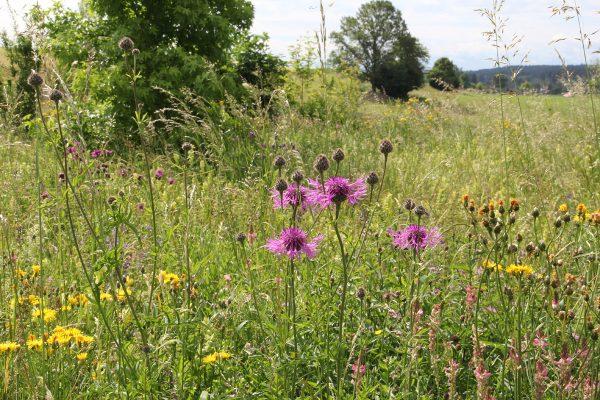 Ein Naturnaher Garten oder sogar eine Wildblumen Wiese?
