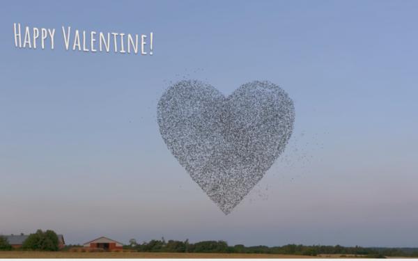 Starschwarm bildet ein Herz zum Valentinstag.