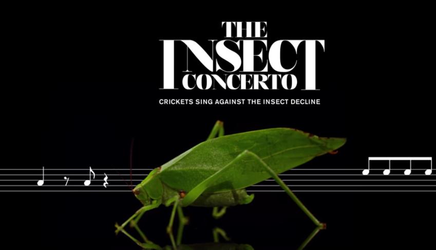 Musikalisch auf das Insektensterben aufmerksam machen.
