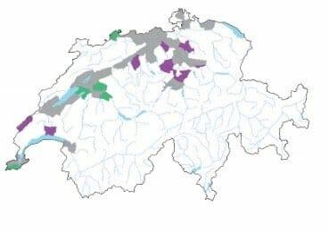 Grau: Fläche wurde im Atlas von Welten und Sutter erwähnt oder in früheren Fortschritten publiziert; Grün: Wiederbestätigte Fläche; Violett: Neue Fortschritte-Fläche © info flora