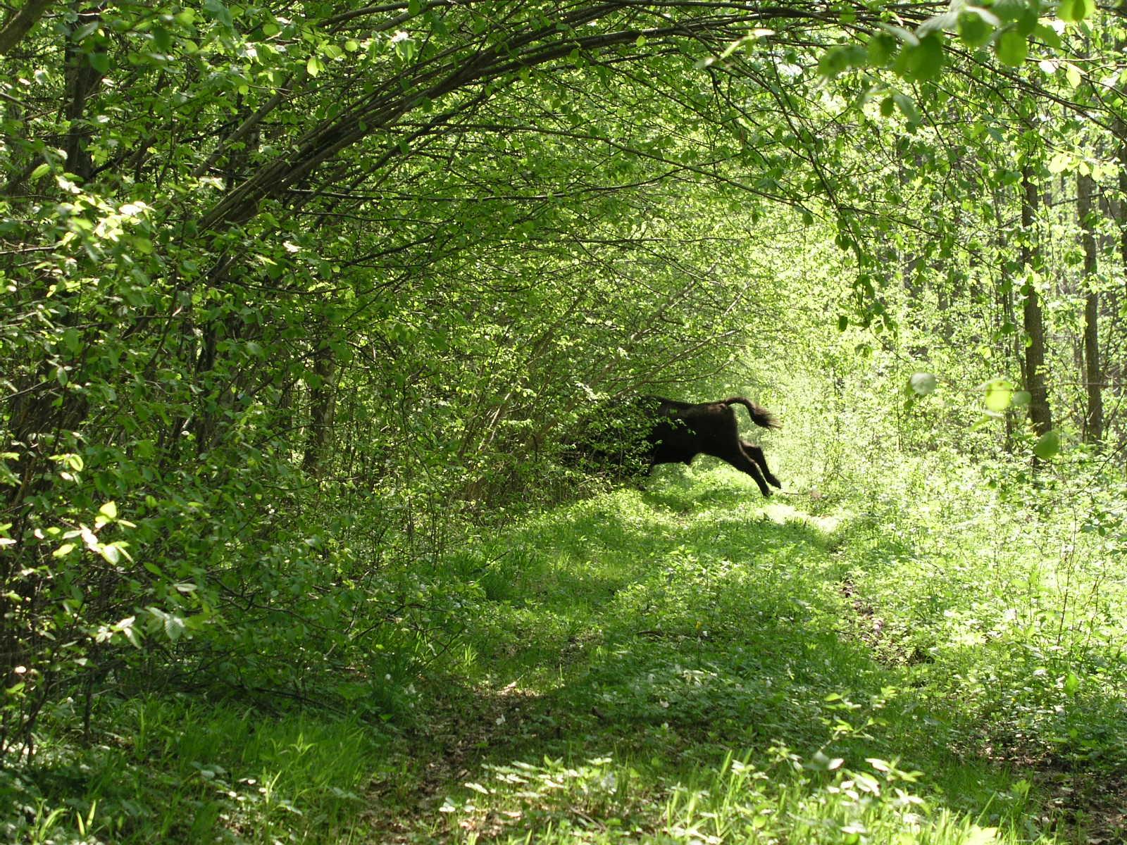 Der Wald ist nun ein Schutzgebiet.