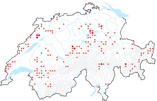 Die schweizweite Verbreitung des Blauen Eisenhuts (Aconitum napellus). Kleine Rote Punkte stellen Fundorte mit weniger als 10 Meldungen dar. Grosse rote Punkte verzeichnen Standorte mit mehr als 10 Meldungen. | © Pixel maps / geo.admin.ch / Distribution maps Info Flora