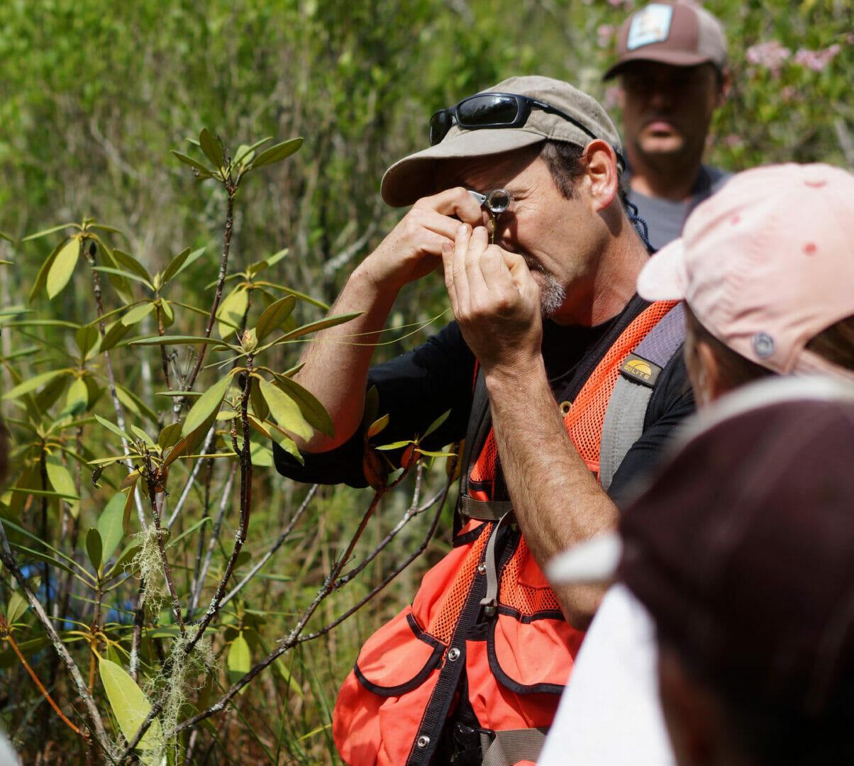 PlantNet: der Botaniker für Ihr Handy 1