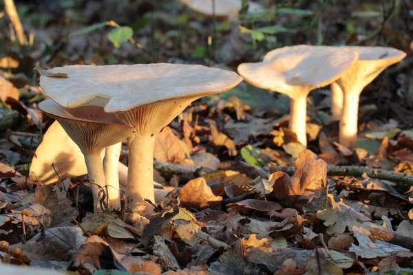 Quiz – Wunderwelt der Pilze 1