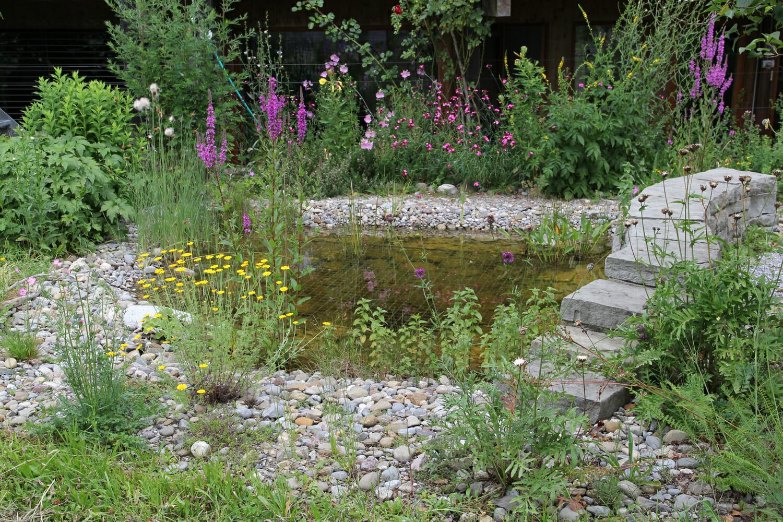 Teich im Garten.