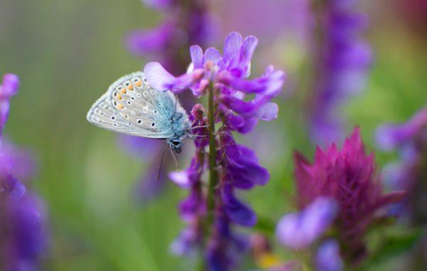 Vom Wolf bis zum Schmetterling gibt's was fürs Auge. © Naturmuseum St.Gallen