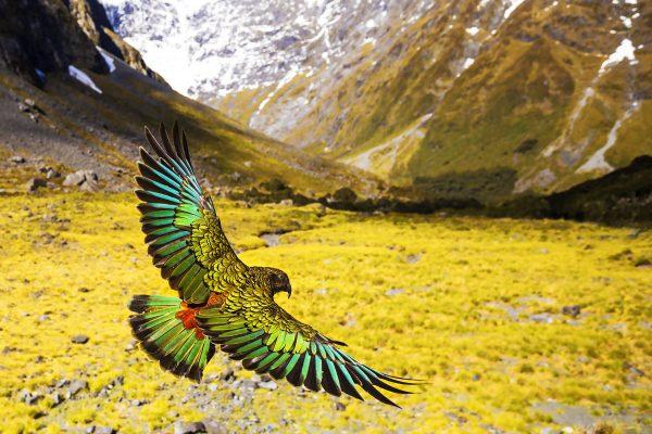 Eindrückliche Landschaften und fantastische Tieraufnahmen erwarten die BesucherInnen am Filmfestival. © Naturmuseum St.Gallen / Wildes Neuseeland: Im Reich der Extreme