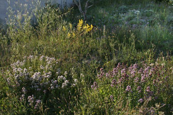 Im Grünen wohnen mit Blumen | © Beatrix Mühlethaler