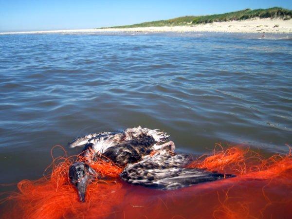 Müll verschmutzt zunehmend unsere Gewässer und tötet unsere Tierwelt. @ NABU/Julia Baer