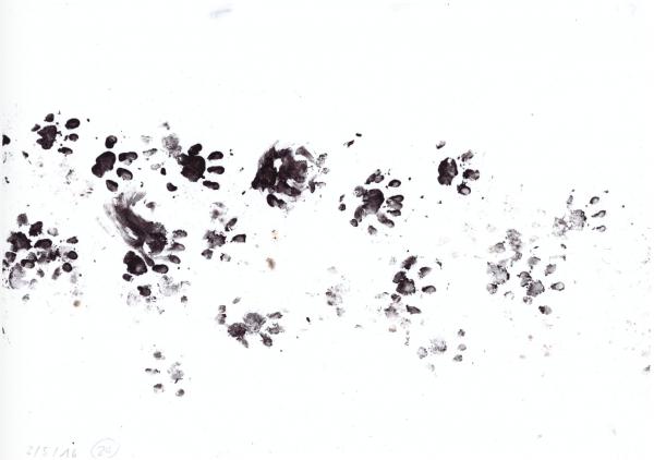 Papierstreifen aus einem Spurentunnel mit den arttypischen Spuren eines Igels. © stadtwildtiere.ch