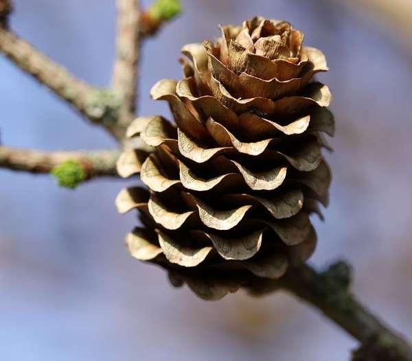Quiz - Bäume und ihre Früchte 9
