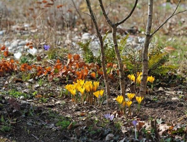 Ein naturnaher Garten im Frühling.