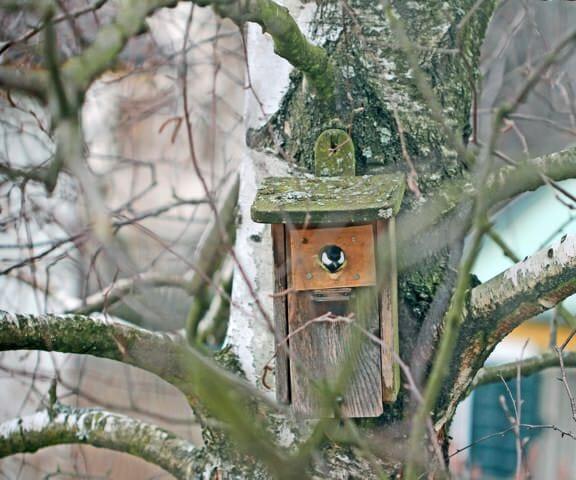 Eine Kohlmeise schaut aus dem Vogelhäusschen heraus.