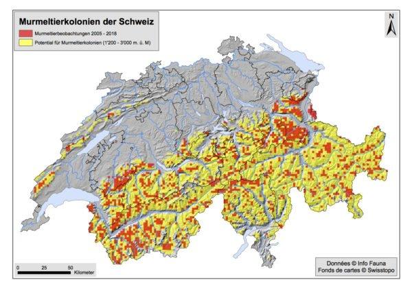 Karte mit Murmeltier-Beobachtungsmeldungen von 2005-2018 (rot). In gelb ist das Potential für weitere Murmeltierkolonien dargestellt. Daten © Info Fauna, Kartengrundlage © Swisstopo