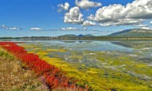 Unterschreiben Sie die Petition zum Erhalt der Saline Ulcinj als Vogelrastgebiet in Montenegro. © CZIP