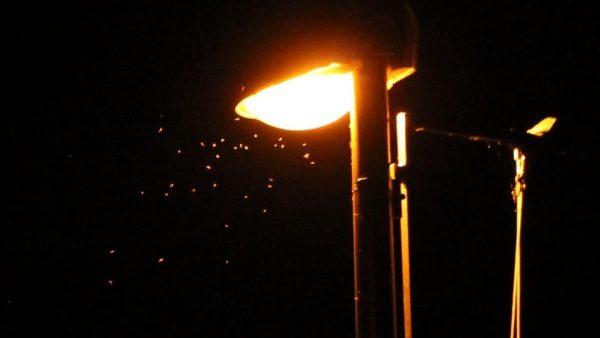 Insekten umschwirren ein Licht.