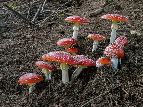 Quiz – Wunderwelt der Pilze 3