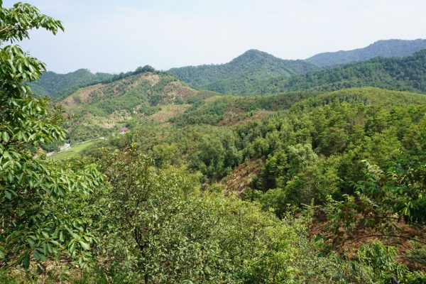 Das Baumdiversitäts-Experiment BEF-China beweist: Bäume kommunizieren mit ihren Nachbarn und fördern sich gegenseitig beim Wachsen. © Goddert von Oheimb