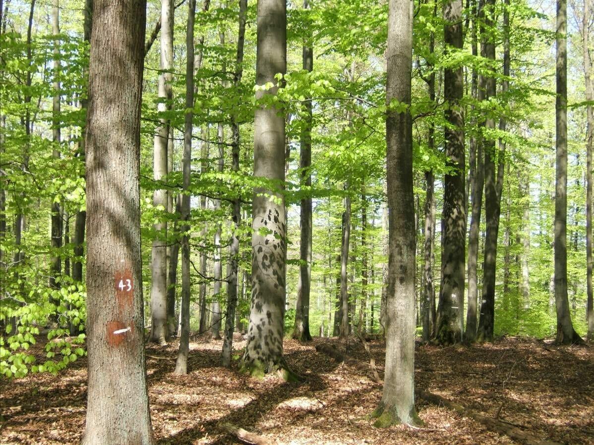 Blick in einen Mischwald, mit Laub am Boden.