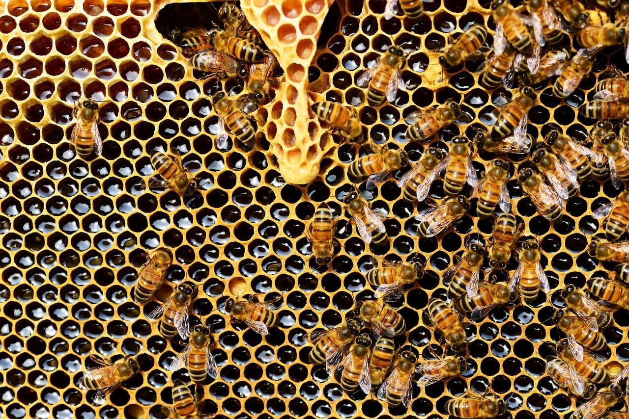 Der Honig ist weltweit mit Pestizid belastet.
