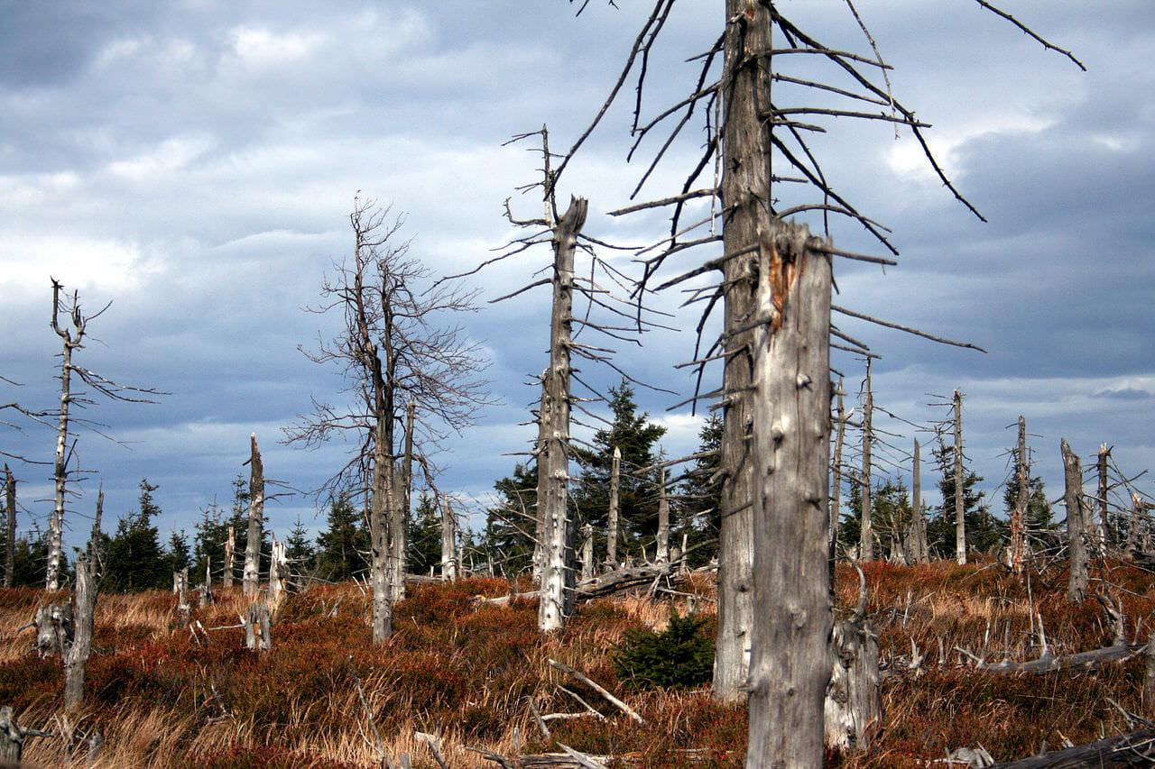 Luftverschmutzung und Feinstaub machen Bäume anfällig auf Trockenheit und fördern so das Waldsterben.